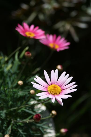 春  マイガーデン(花)_d0150720_856498.jpg
