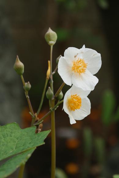 春  マイガーデン(花)_d0150720_8571936.jpg