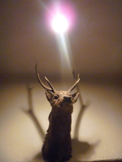この鹿なん才?_b0174425_18593547.jpg
