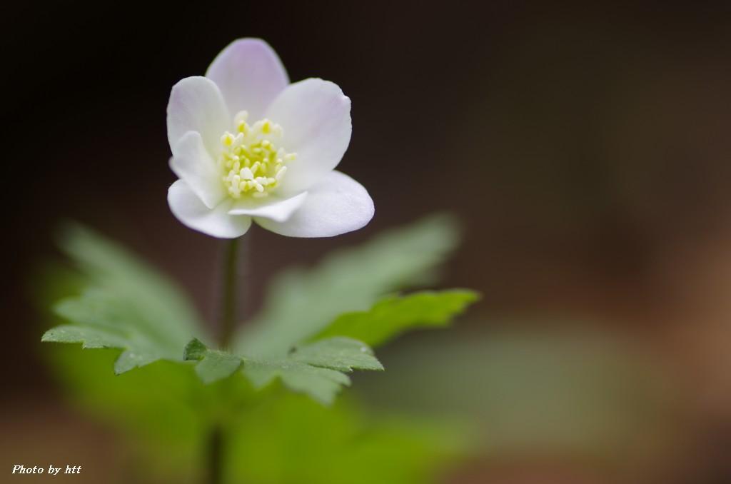 春の花々_f0148627_1291315.jpg