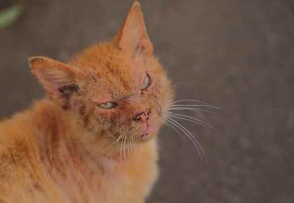 猫の森のゴクドウ_f0214527_1853123.jpg