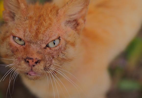 猫の森のゴクドウ_f0214527_187779.jpg