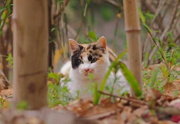 猫の森のゴクドウ_f0214527_1895386.jpg