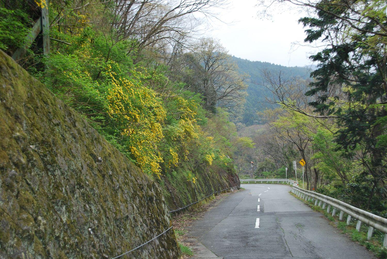 山は花盛り_c0162128_731936.jpg