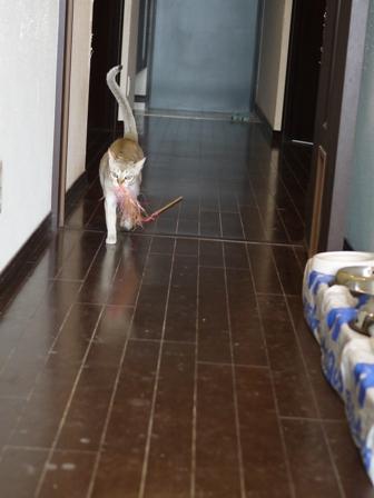 猫のお友だち シナモンちゃんプーちゃんとのくん編。_a0143140_20382691.jpg