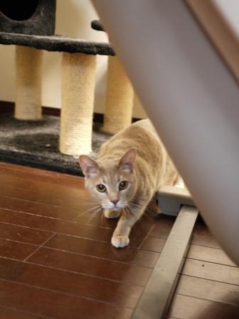 猫のお友だち シナモンちゃんプーちゃんとのくん編。_a0143140_20453825.jpg