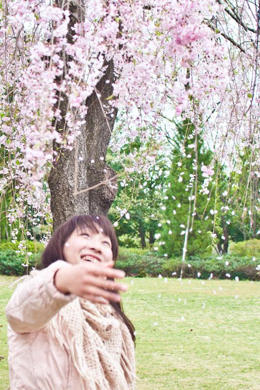 枝垂れ桜[昭和記念公園の桜]_d0214541_22251025.jpg
