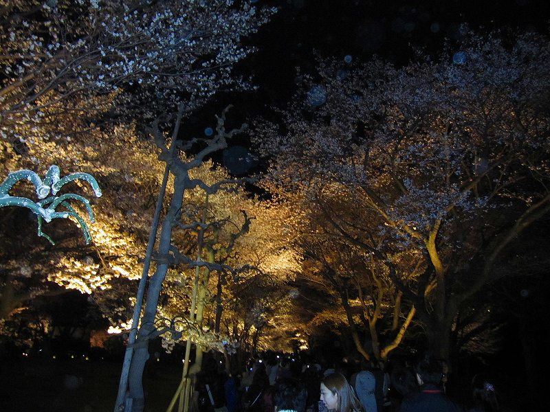二条城の夜桜_e0237645_14581694.jpg