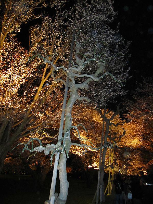 二条城の夜桜_e0237645_1458349.jpg