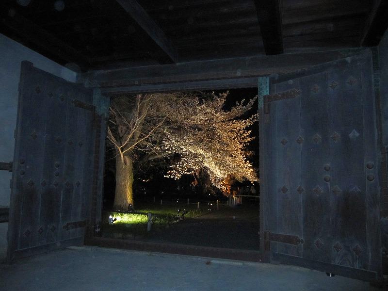 二条城の夜桜_e0237645_150328.jpg