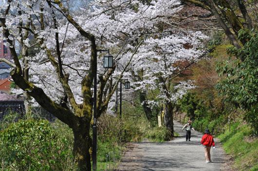 桜(4)_c0093046_10381342.jpg