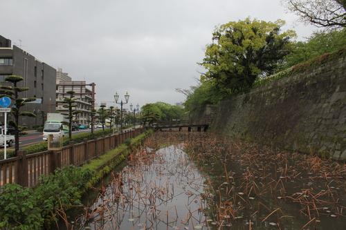 鹿児島帰郷レポート 2日目_d0202264_6431159.jpg