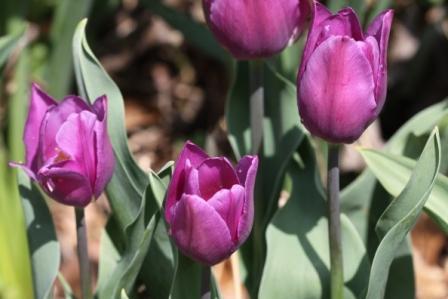 近所の花!_a0117168_1165749.jpg