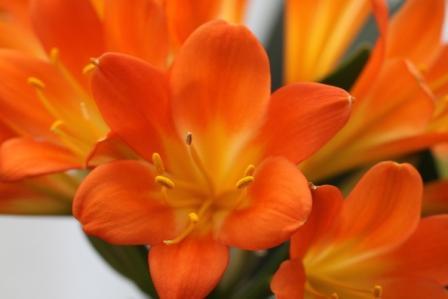 近所の花!_a0117168_1183785.jpg