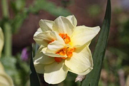 近所の花!_a0117168_1185479.jpg