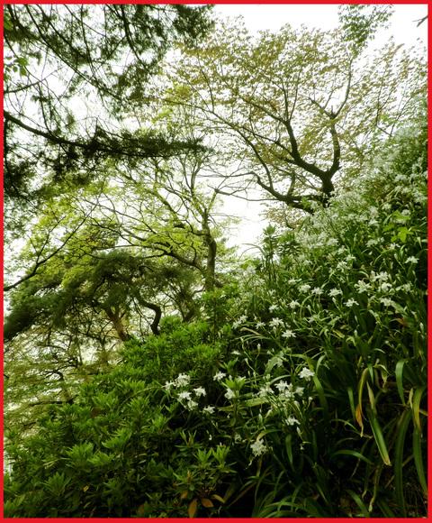 近所の春報告。野花が綺麗に咲いています、青山。_e0236072_14125985.jpg