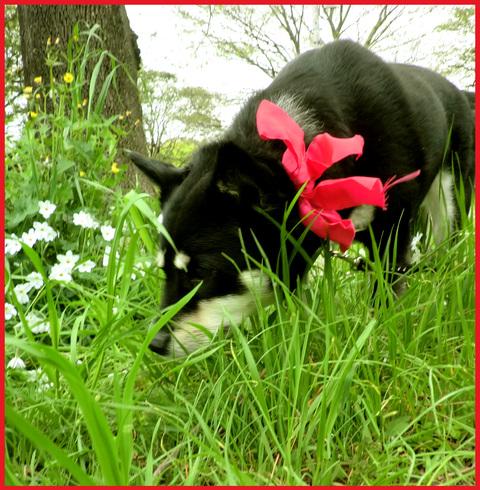 近所の春報告。野花が綺麗に咲いています、青山。_e0236072_14154319.jpg