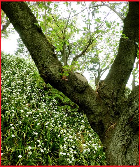 近所の春報告。野花が綺麗に咲いています、青山。_e0236072_14211727.jpg