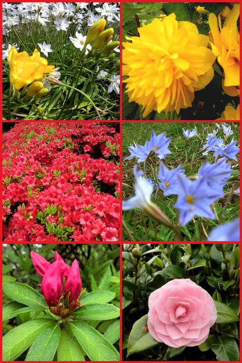 近所の春報告。野花が綺麗に咲いています、青山。_e0236072_1427797.jpg