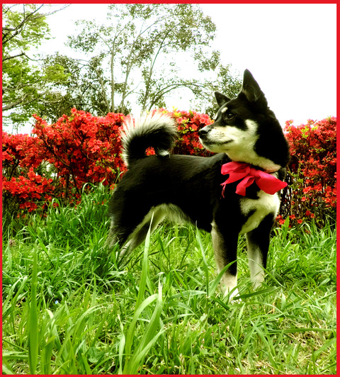 近所の春報告。野花が綺麗に咲いています、青山。_e0236072_14304355.jpg