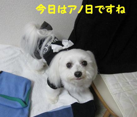 b0193480_1171870.jpg