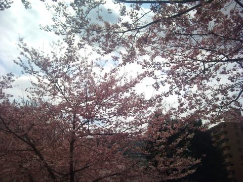 春のお酒~その壱~_e0275281_13524133.jpg