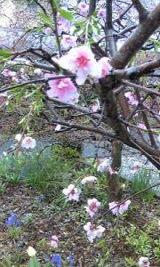 春はそわそわ・・・_e0202182_13504173.jpg