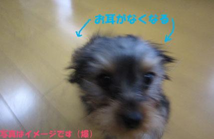 長崎の鐘_e0125894_1722820.jpg