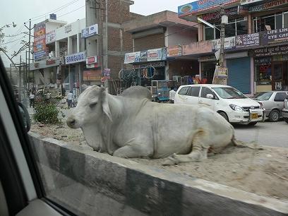 インド出張2012年04月-結構過ごしやすかったインド_c0153302_26206.jpg