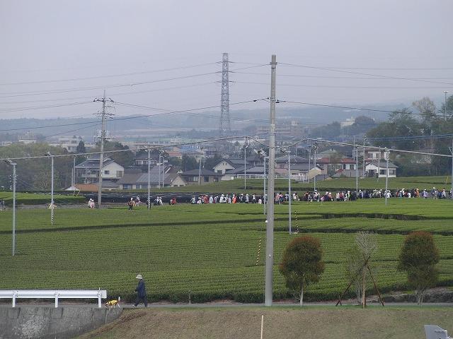 新緑の茶畑を楽しむ「第34回 富士ふれあいウォーク」_f0141310_750174.jpg