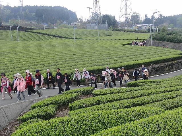 新緑の茶畑を楽しむ「第34回 富士ふれあいウォーク」_f0141310_7523768.jpg