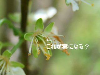 b0197433_15342159.jpg