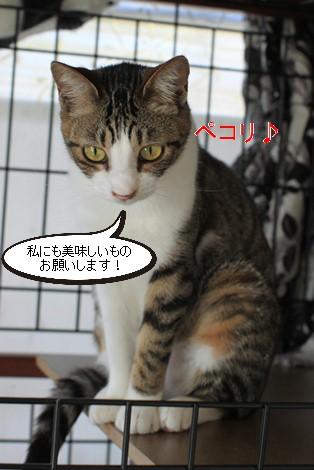 e0151545_20125668.jpg