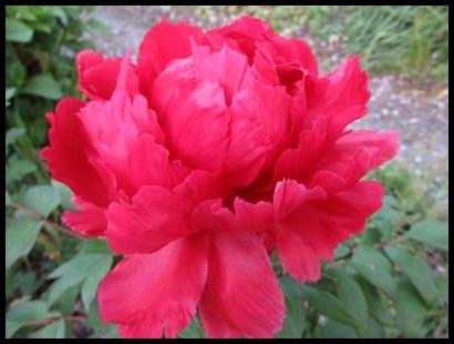 f0113862_20105286.jpg