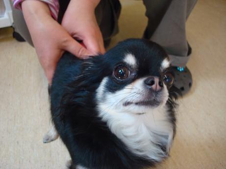 狂犬病予防注射_d0006467_15562168.jpg