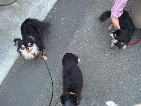 狂犬病予防注射_d0006467_15563839.jpg