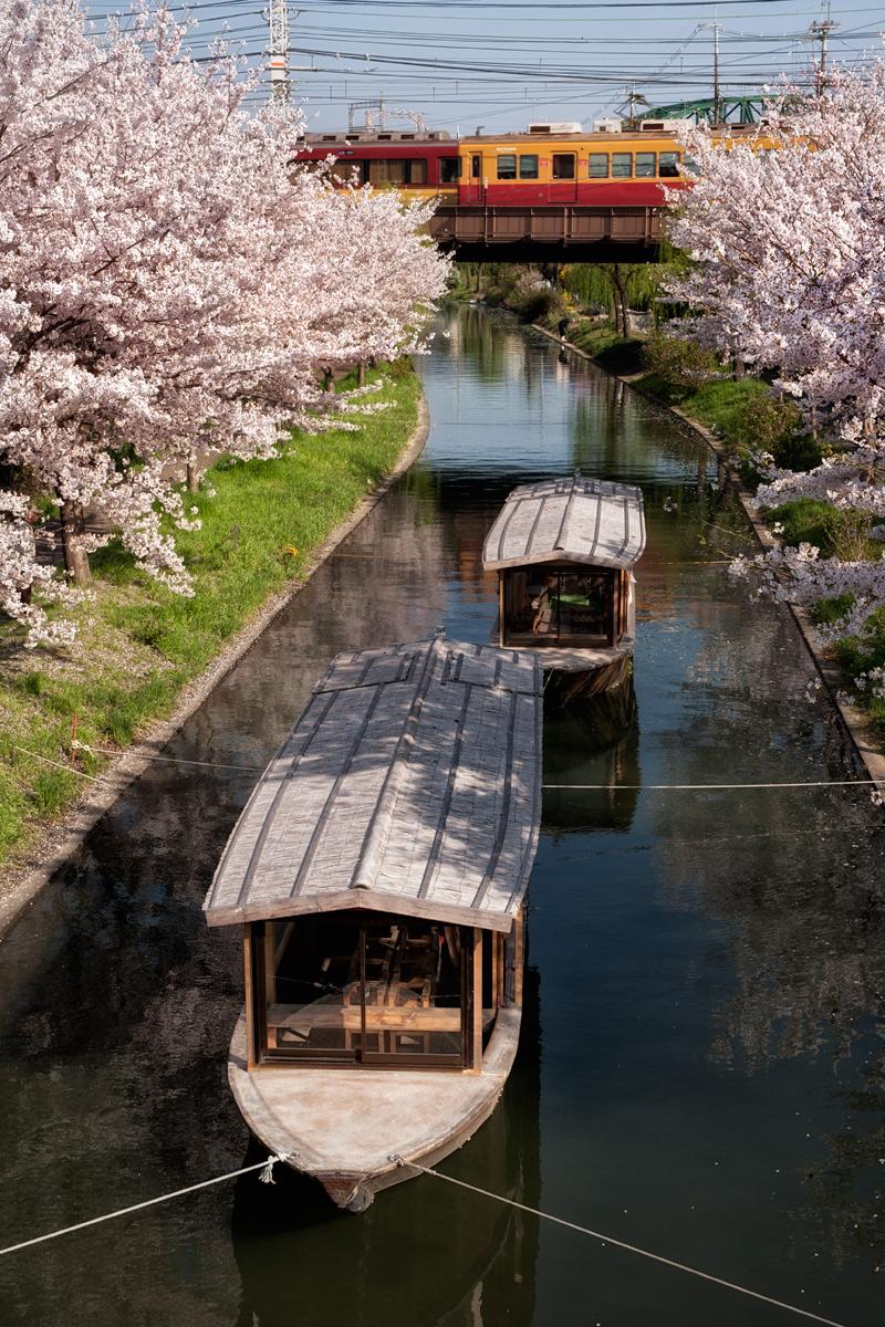桜 2012  京都 <中書島>_f0021869_23271936.jpg
