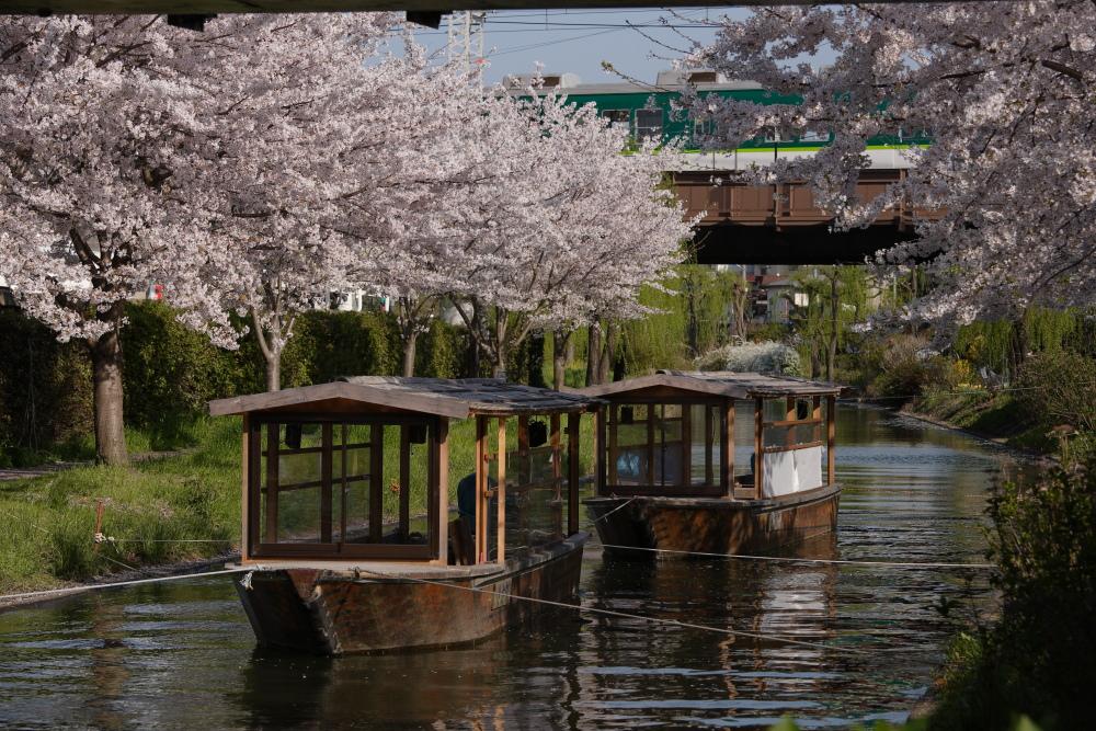 桜 2012  京都 <中書島>_f0021869_23281196.jpg