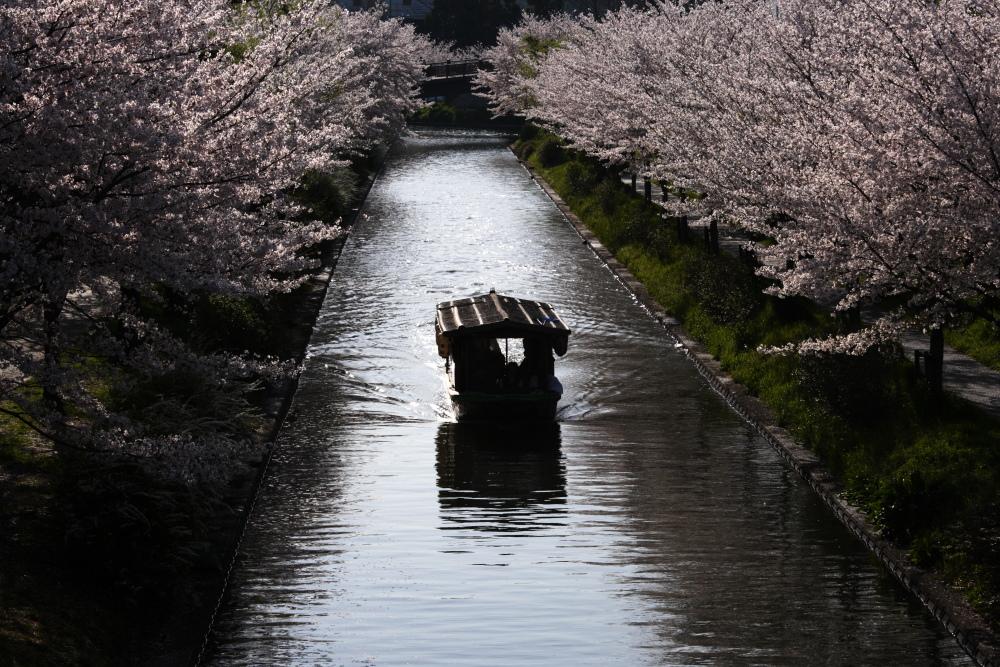 桜 2012  京都 <中書島>_f0021869_23423097.jpg