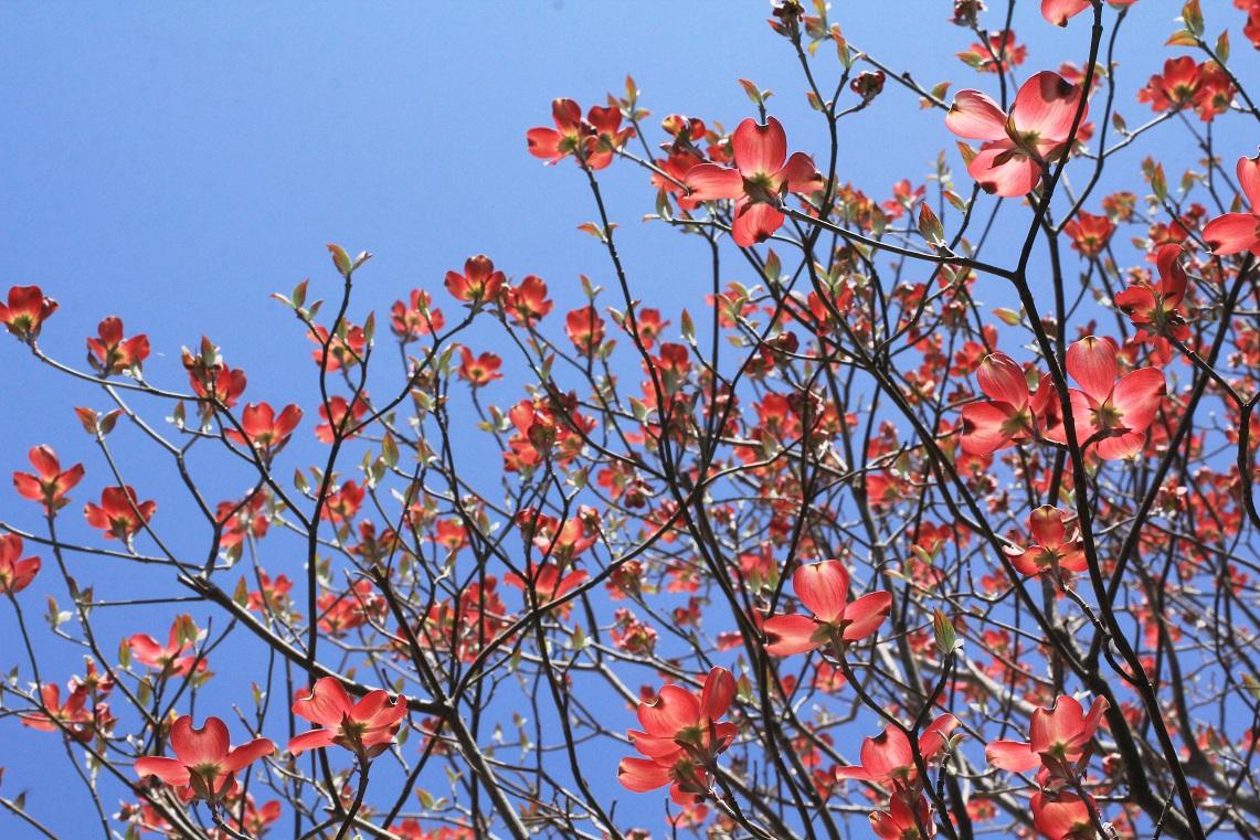 神様に感謝したくなる春の日々_a0107574_11194652.jpg