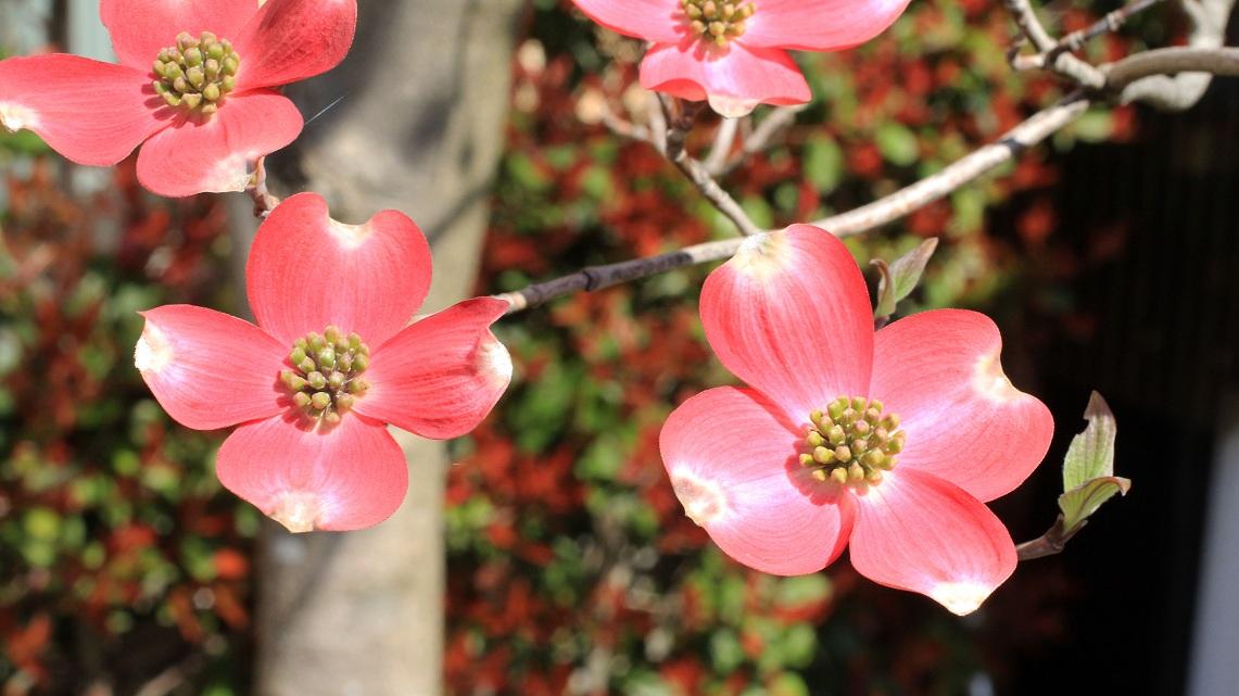 神様に感謝したくなる春の日々_a0107574_11194743.jpg