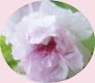 f0137275_5231194.jpg