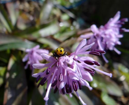庭の花と、小さなお客様♪_a0136293_17273268.jpg