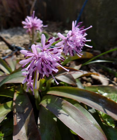 庭の花と、小さなお客様♪_a0136293_17284492.jpg