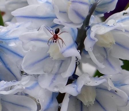 庭の花と、小さなお客様♪_a0136293_17361814.jpg