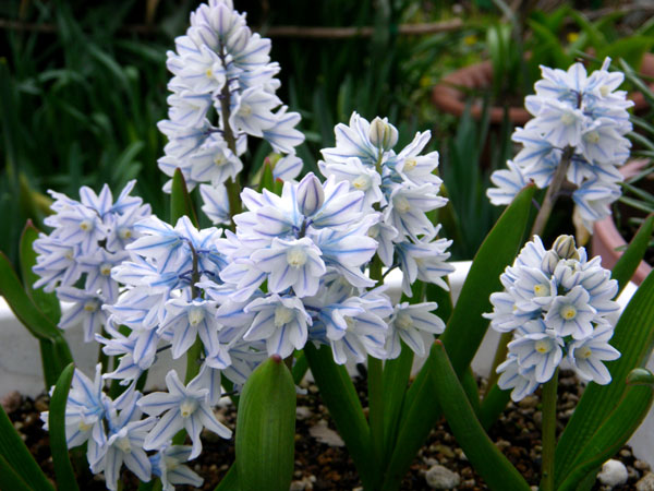 庭の花と、小さなお客様♪_a0136293_1737529.jpg