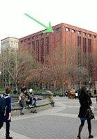 今年も鷹の赤ちゃんがニューヨーク大学の窓で生まれました!_b0007805_23223642.jpg