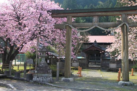 黒田の百年桜_e0048413_21555274.jpg