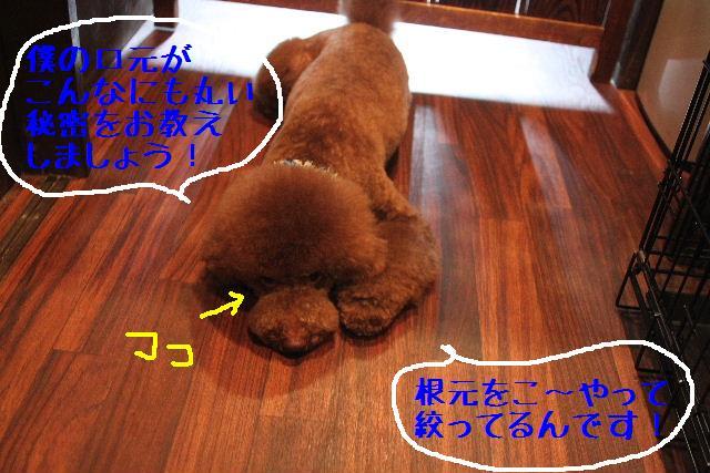 b0130018_045188.jpg