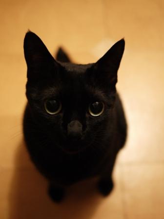 パトロール猫 のぇる編。_a0143140_23233633.jpg